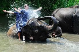 elephant-eddy-3