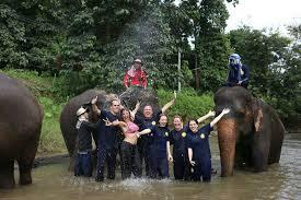 elephant-eddy-4