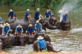 elephant-eddy-5