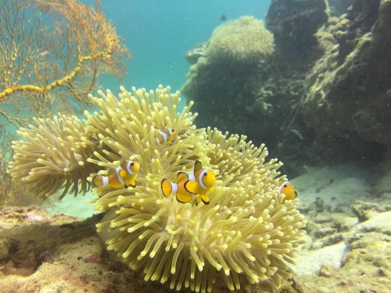 Forra-Dive-Resort-à-Koh-Lipe-8