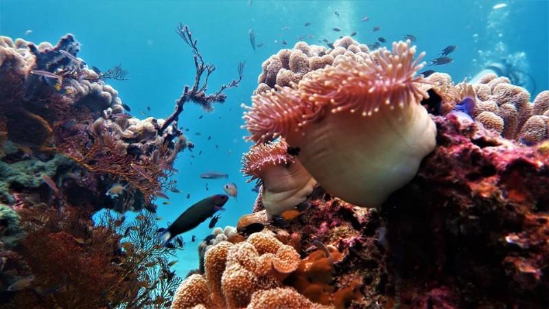 Forra-Dive-Resort-à-Koh-Lipe-9